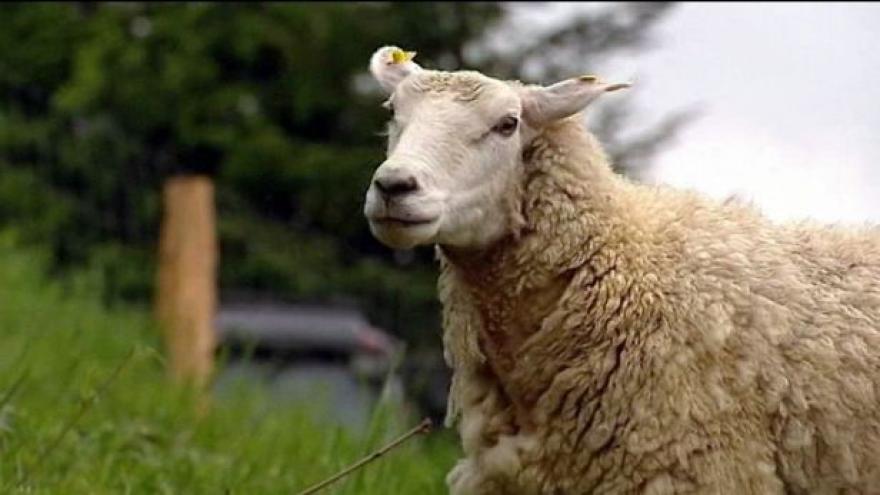 Video Bez internetu si neporadí ani chovatel ovcí