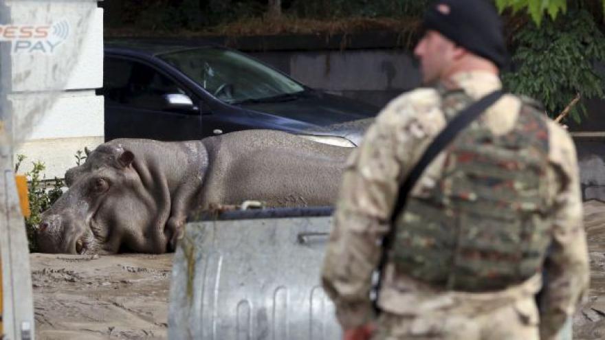 Video Bobek: Zvířata uprchlá ze zoo jsou o to nebezpečnější