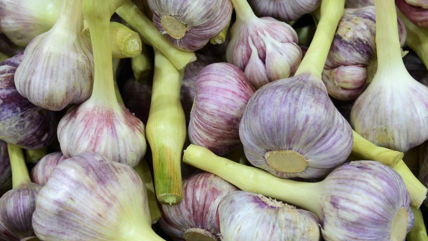 Video Reportáž o letošní sklizni česneku