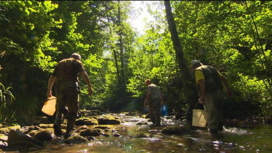 Video Události ČT: Na Náchodsku zachraňují raky kvůli suchu
