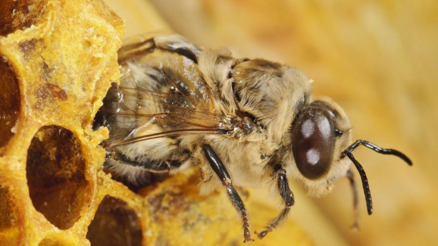 Kvůli prudkému ochlazení může být letos méně medu — ČT24 — Česká televize