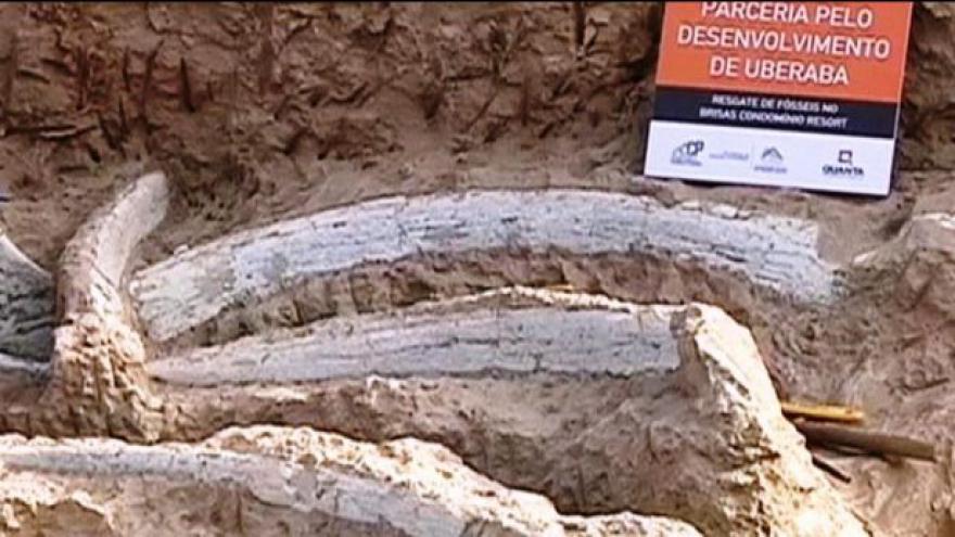 Video Reportáž: V Brazílii našli kosti neznámého dinosaura