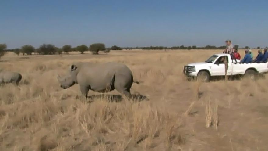 Video Nárůst pytláctví skoro vyhubil světovou populaci nosorožců