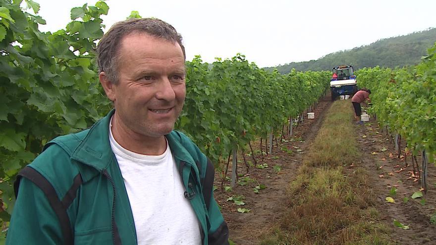 Video Vinař Pavel Matouš o letošní sklizni hroznů
