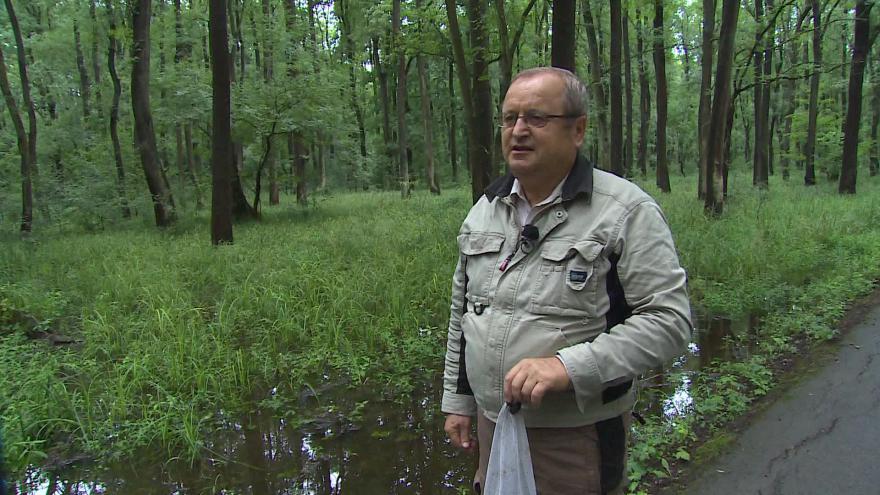 Video Entomolog Oldřich Šebesta o letošním výskytu komárů