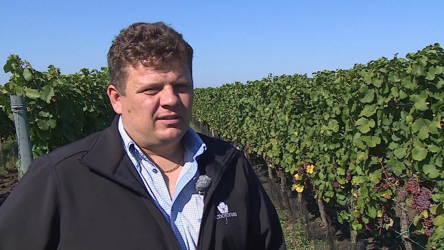 Video Ředitel Svazu vinařů hovoří o rozšiřování vinic
