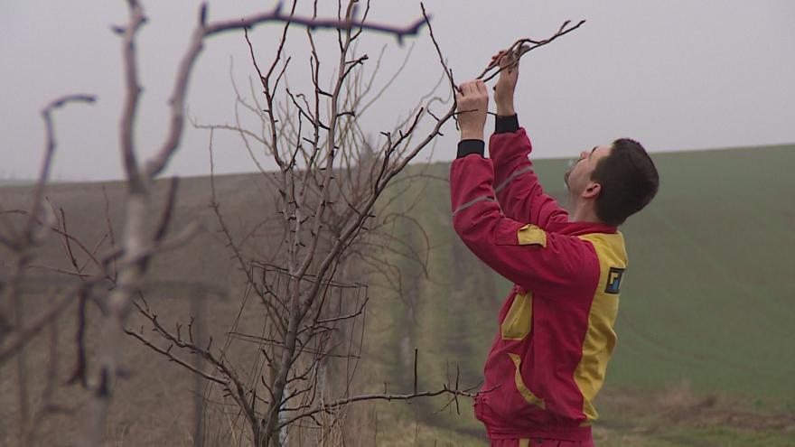 Video Zemědělec Jiří Novotný vysázel podél cesty větrolam sám