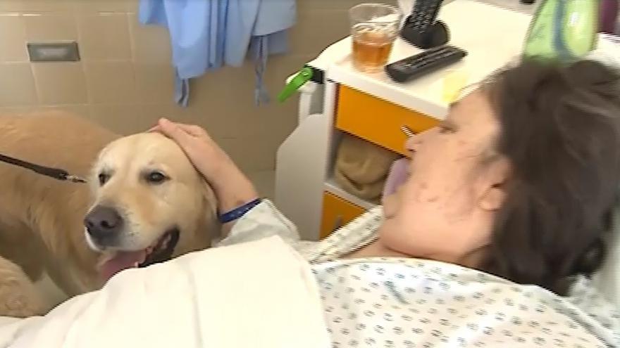 Video Devítiletý retrívr Baron chodí za pacienty do nemocnice každý týden