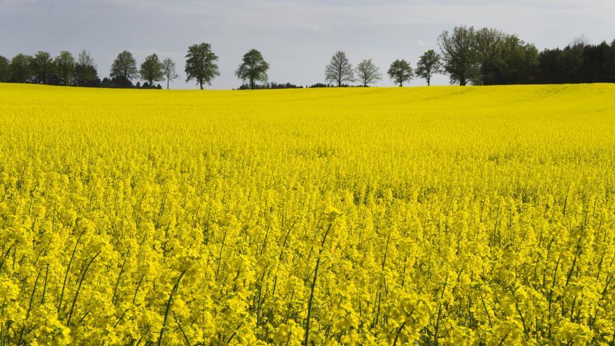 Video Události: Deset let s biopalivy