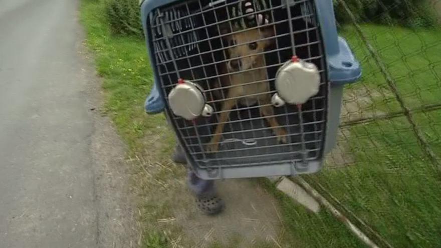 Video Odebrání psů