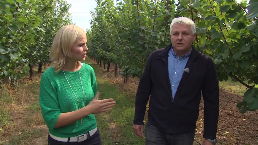 Video Ivo Pokorný komentuje malou úrodu ovoce