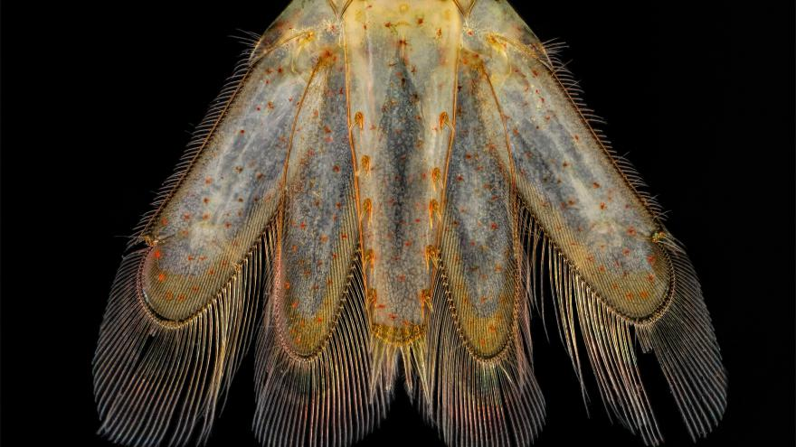 Video Nezmar a larva komára