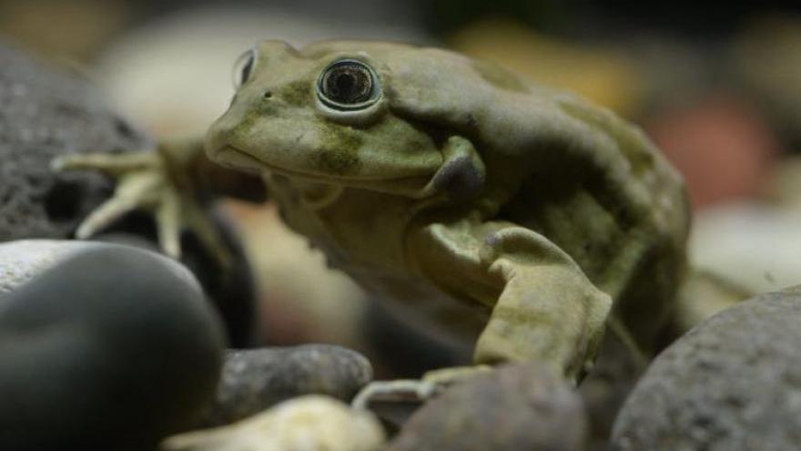 Video V Peru vyšetřují úhyn tisíců vzácných žab