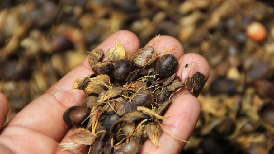 Video Je palmový olej špatný?