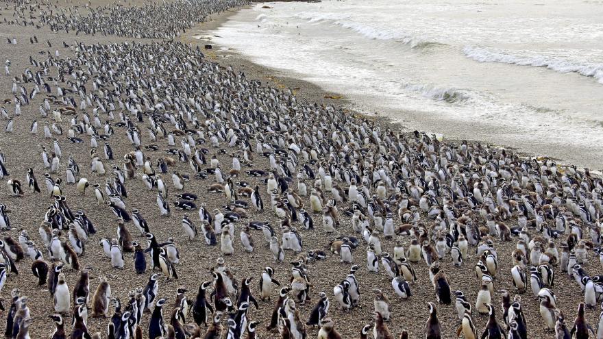 Video Milion tučňáků