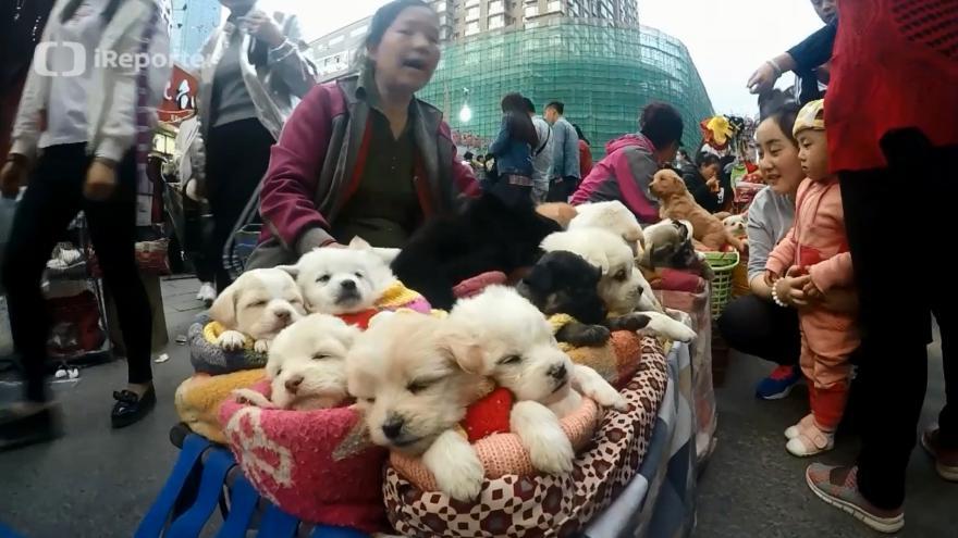 Video Prodej štěňat v Číně