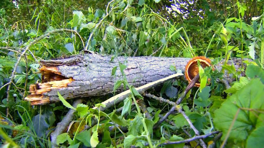 Video Záběry z místa: V Černém Rudolci spadl na děti strom