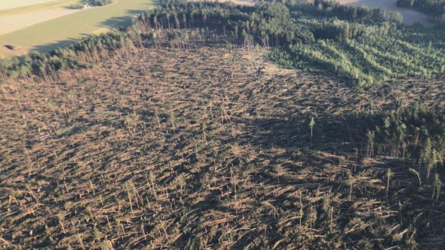 Video Škody na lesích jsou vyšší, než se čekalo