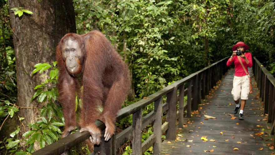 Video Zaorálek na návštěvě Malajsie
