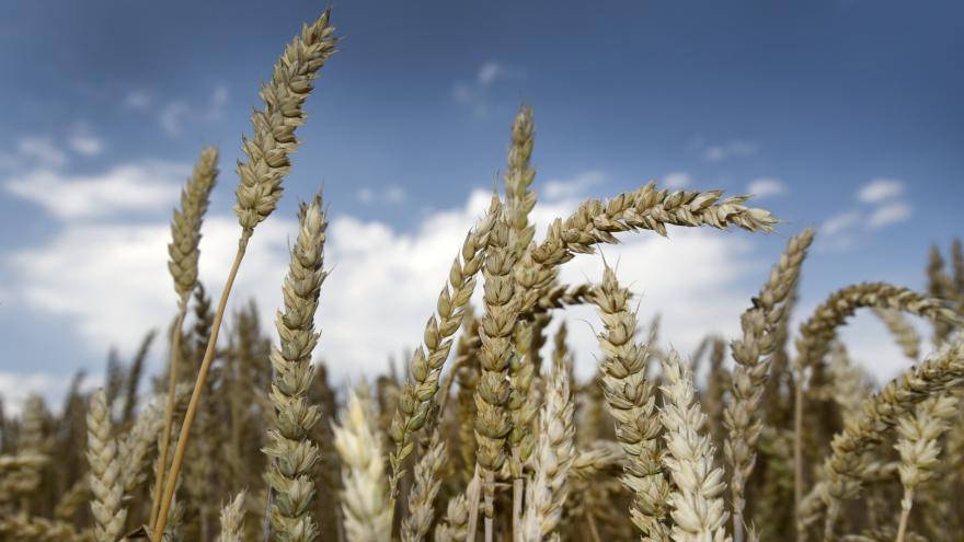 Video Profesor Doležal o genetické úpravě rostlin