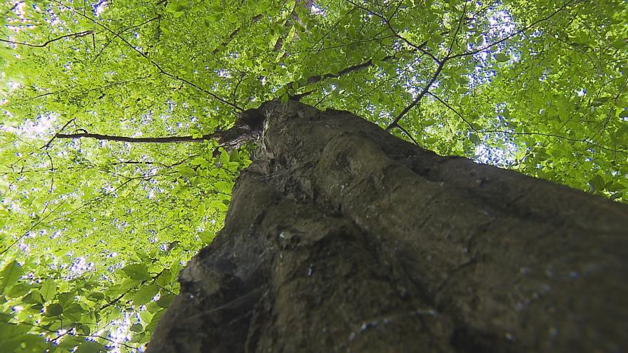 Video Geocaching pomáhá přírodě