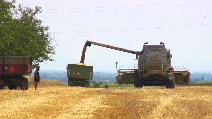 Video Na mizernou sklizeň má vliv sucho, pečivo asi podraží