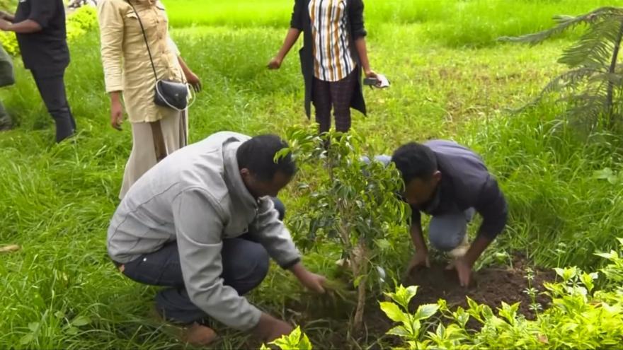 Video Etiopie má rekord v sázení stromů
