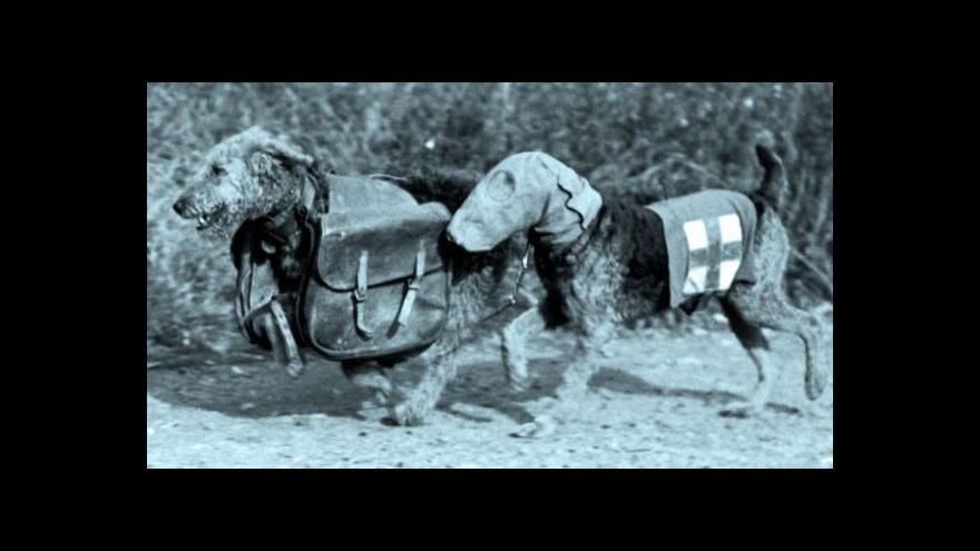 Video Ve válečných zákopech stáli psi po boku vojáků