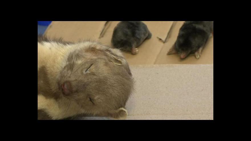 Video Česko po letech buduje síť genetických bank živočichů