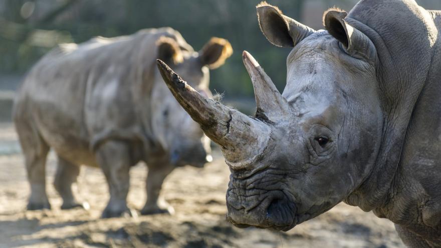 Video 90' ČT24 - Lidstvo vyhubilo polovinu zvířecích druhů