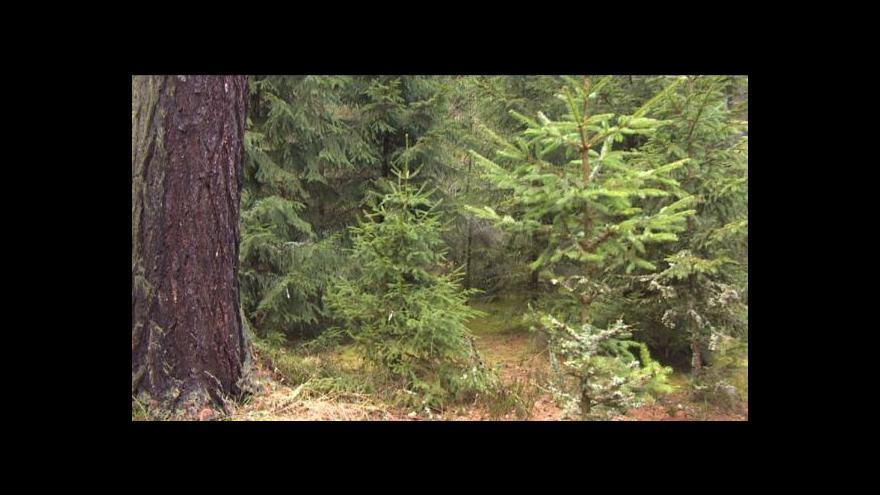 Video Zloděje neodradí od krádeže stromku ani zapáchající roztok