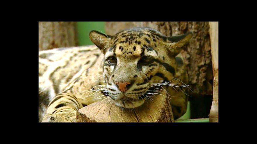 Video Zoo v Praze, Plzni a Táboře prodělávají odlišné situace
