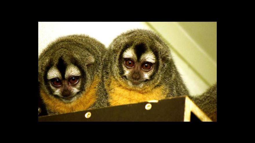 Video Bez komentáře: Plzeňská zoo má nové expozice