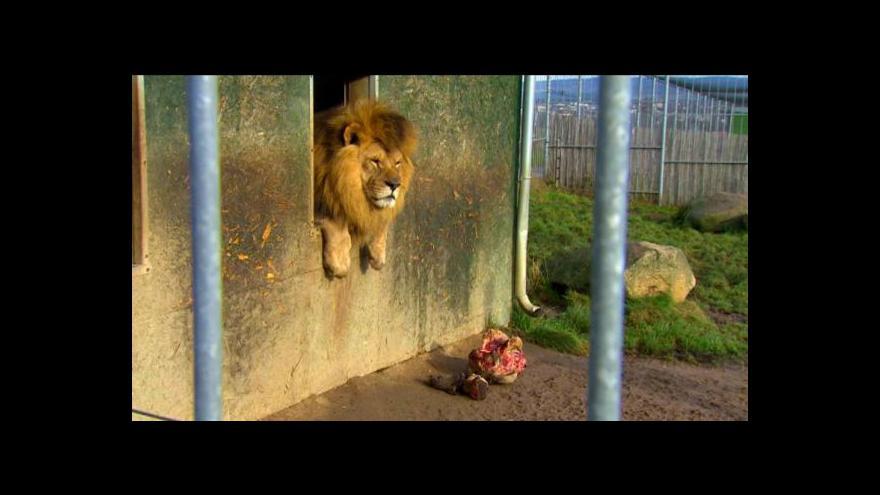 Video Táborská zoo má opět potíže