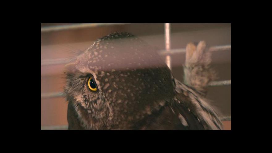 Video Kulíšek opět létá po šumavské obloze