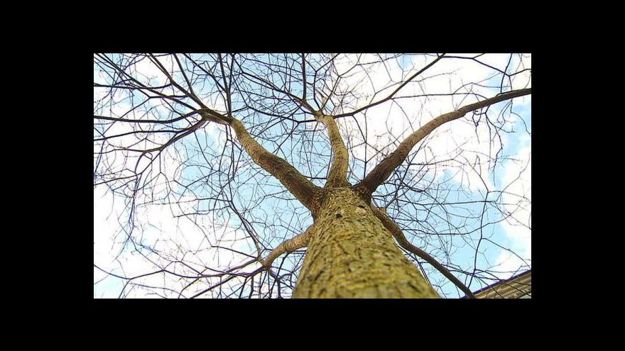 Video Lidé z pražských částí nedávají stromy zadarmo