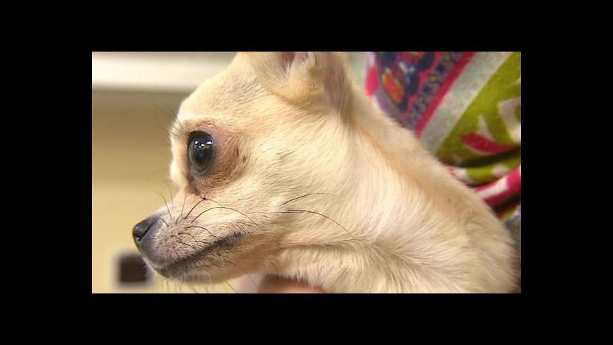 Video Nelegální byznys se psy