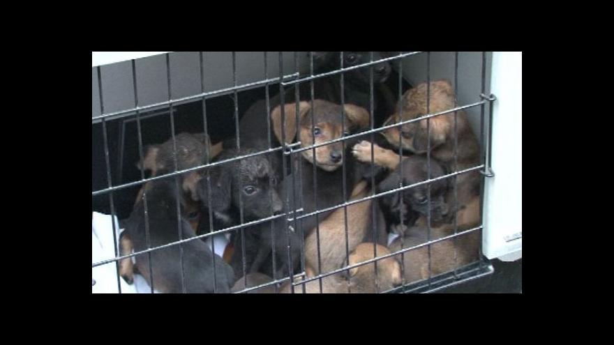 Video Mluvčí Státní veterinární služby