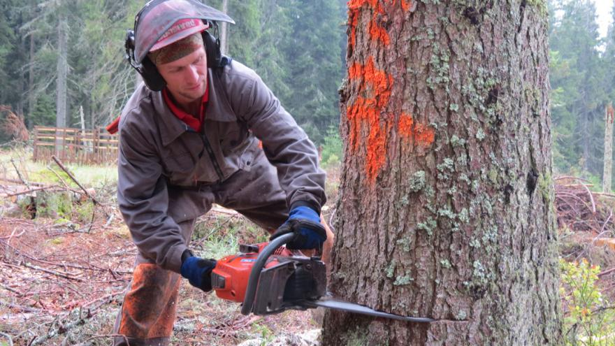 Video Problémy se dřevem