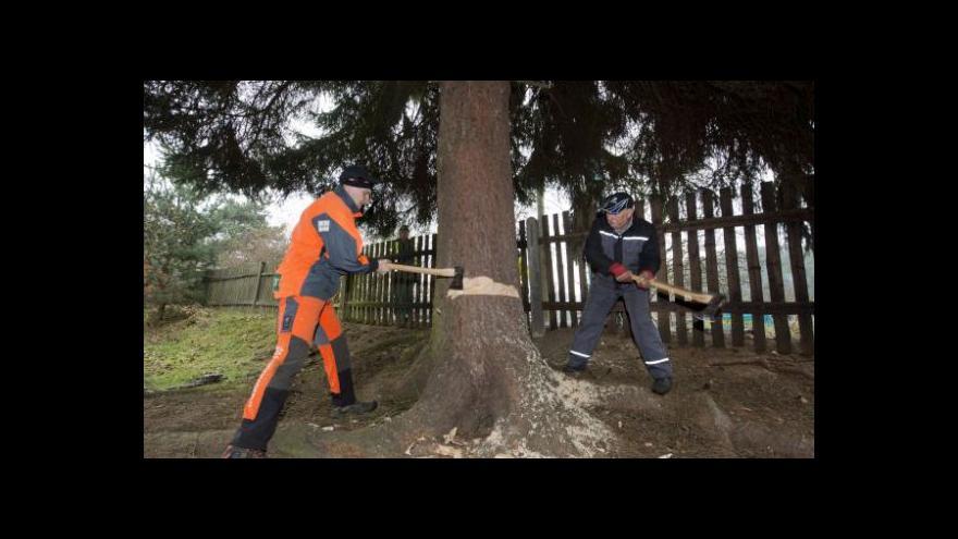 Video Události: Staroměstský vánoční strom se chystá na cestu do Prahy
