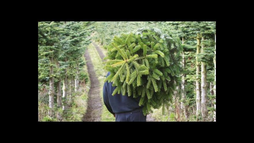 Video České domácnosti ozdobí milion vánočních stromků