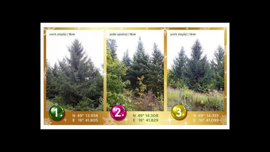 Video Brno vybralo vánoční strom