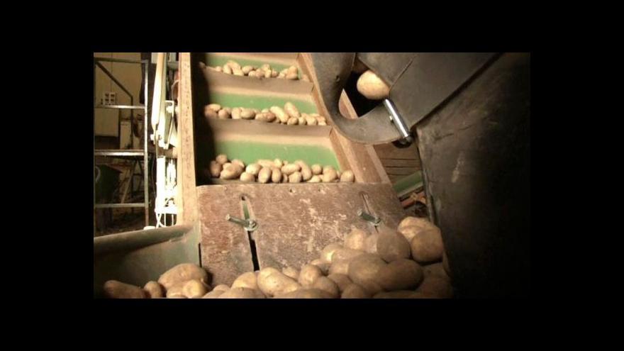 Video V Nizozemsku vypěstovali díky mořské vodě slané brambory