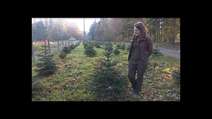 Video O pěstování vánočních stromků hovoří Petra Barinová