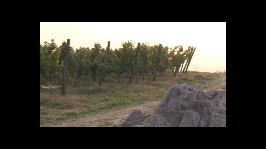 Video Čeští vinaři pěstují víno v Číně