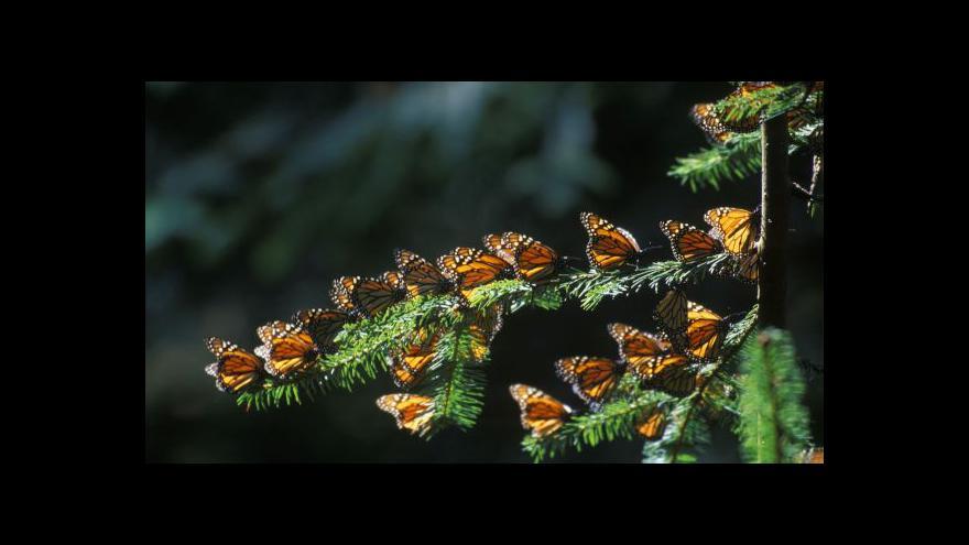 Video Monarchové se připravují na cestu kontinentem