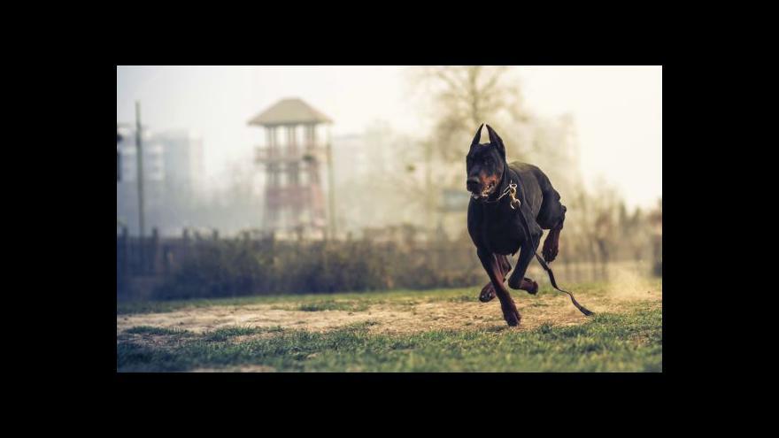 Video Psycholog psů Desenský: I psi mají dialekty