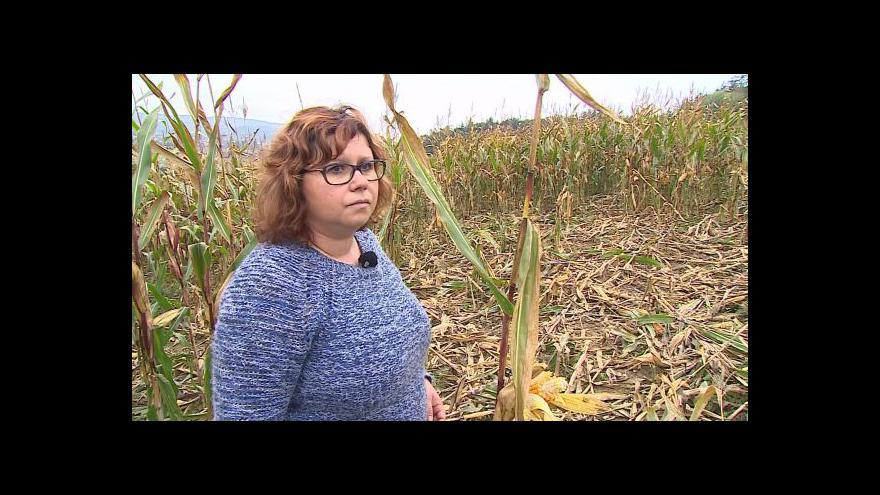 Video O škodách způsobených divočáky hovoří Hana Havelková