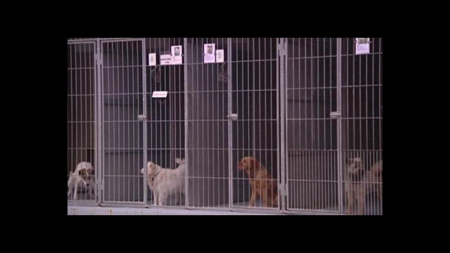 Video Zatoulaných psů je příliš mnoho, do útulků se sotva vejdou