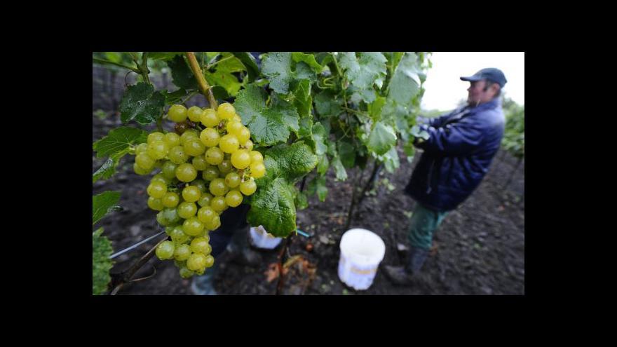 Video Počasí vinařům nepřálo, hledají pomoc v Bruselu